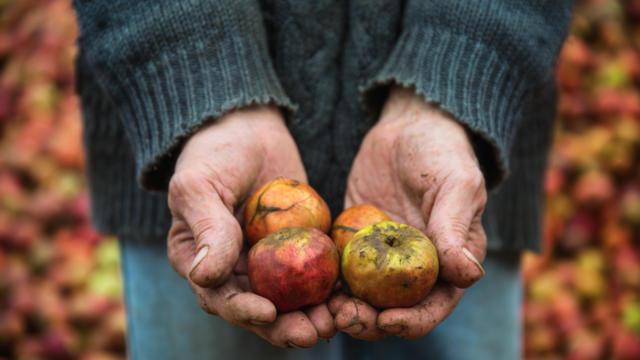 Pommes à cidre - Groult