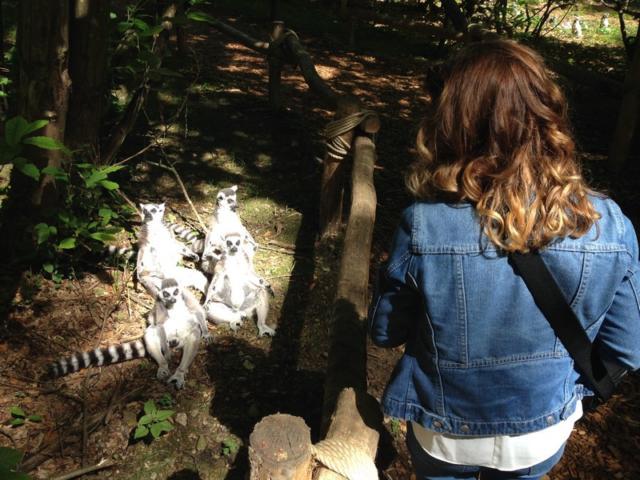 Safari Des Lémuriens Parc Zoologique Cerza Lisieux