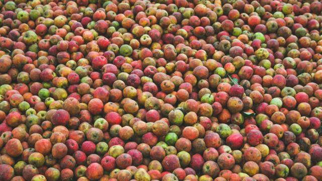 Pommes chez Calvados Groult