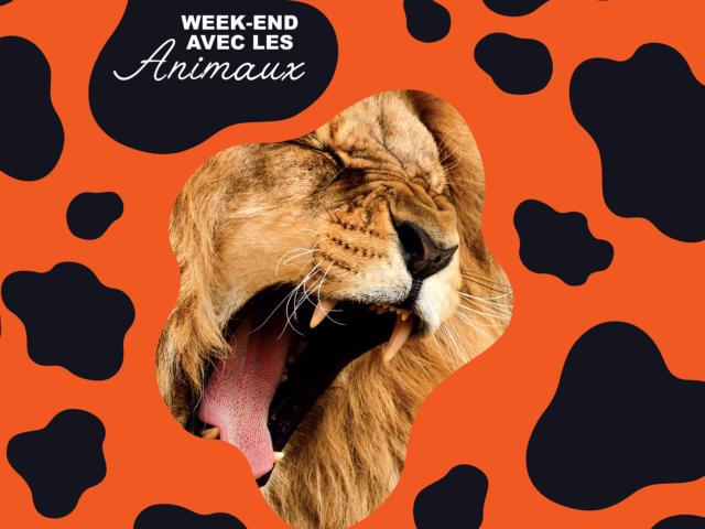 Week End Avec Les Animaux Authentic Normandy