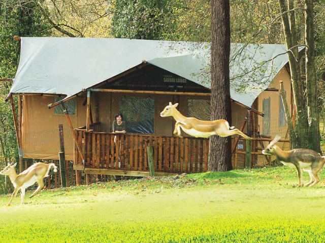 Tentes Safari Cerza